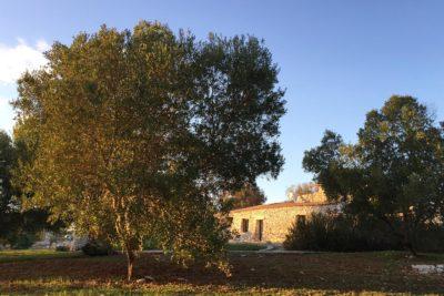 Residenza Pajara Marancio esterno con natura   Casa Vacanze in affitto Salento Feudo Frammasi