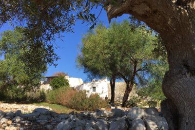 Residenza Pajara Bracchio esterno con natura | Casa Vacanze in affitto Salento Feudo Frammasi